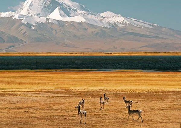 17 Days Northern Mt Kailash(Ali) Tour