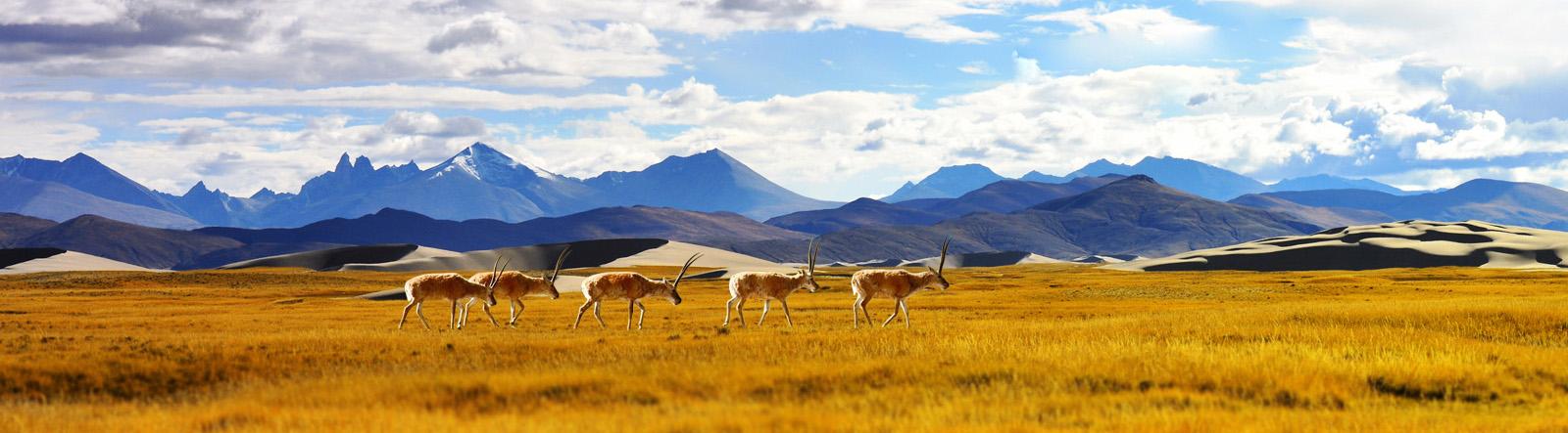 Tibet Group Tour,Mount Kailash Tour